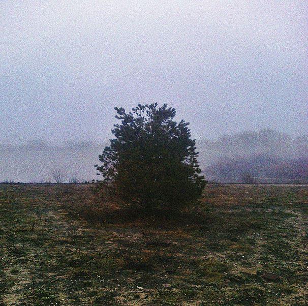 fog14